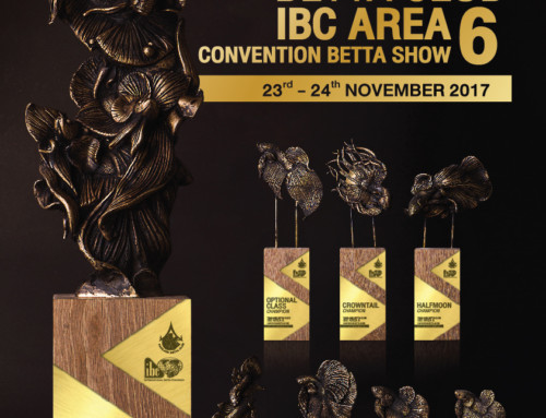 Sneak Peek: Thailand Betta Club's Area 6 Convention Show Awards